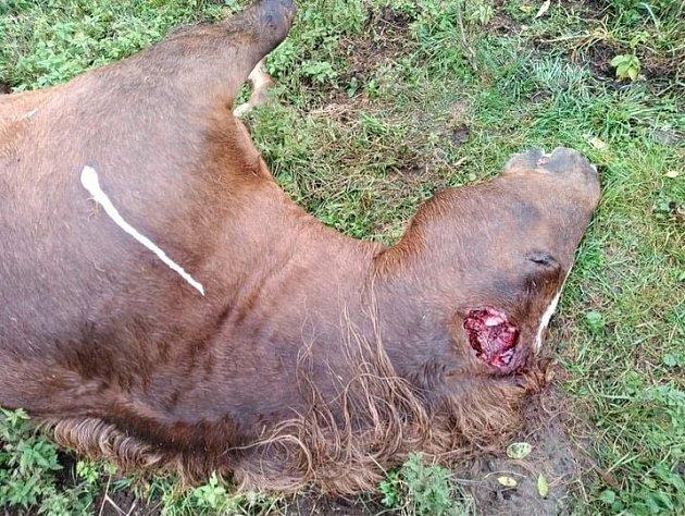 Sedláku pod Milešovkou Danielu Pitkovi někdo trýznivým způsobem zabil koně, nabízí odměnu za dopadení pachatele.