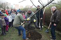 Akce Zasaď si svůj strom v Litoměřicích