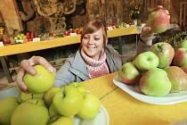 Slušnou a kvalitní úrodou se nyní chlubí na ploskovickém zámku, kde se koná již pátý ročník výstavy Ploskovické jablko.