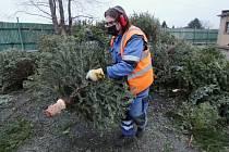 Štěpkování vánočních stromků v Litoměřicích
