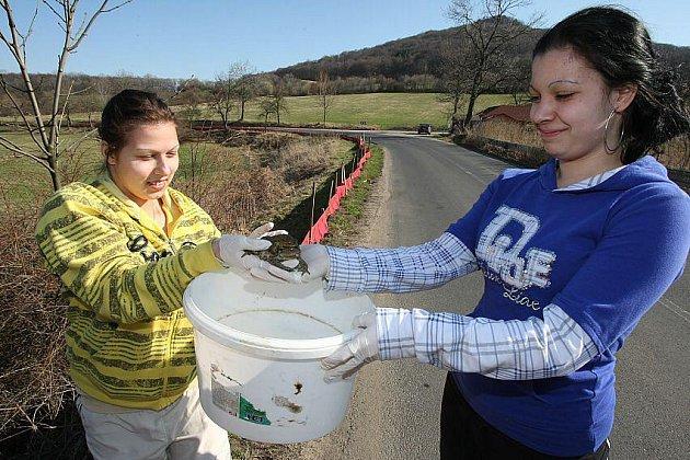 Dobrovolníci společně s  pracovníky Správy CHKO zajišťují bezpečný přechod žab, aby neskončily pod koly projíždějících aut.