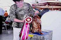 Fena plemene King Charles Spaniel Inaja Bohemia Zlatava chovatelky a majitelky Iriny Korbelové ze Vchynic (na snímku) slavila v minulých dnech úspěch na světové výstavě psů v Bratislavě.