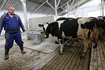 Do nově zrekonstruovaného kravína v Klapý se nastěhovaly krávy