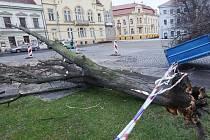 STROM na Václavském náměstí v Lovosicích spadl těsně před koncem roku.