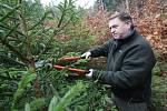 Pracovníci lesní správy Lesů ČR v Litoměřicích nyní vyrážejí do terénu a esteticky znehodnocují potencionální vánoční stromky proti krádežím.