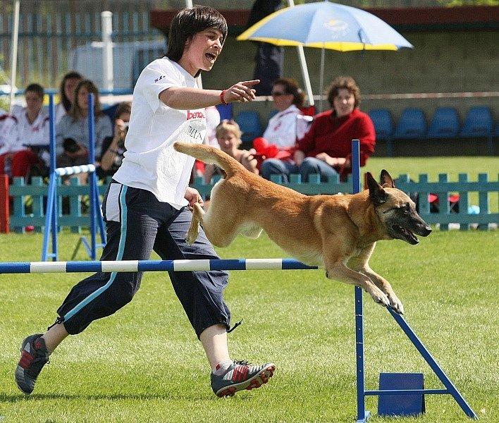 15. Mistrovství světa belgických ovčáků v Roudnici nad Labem.