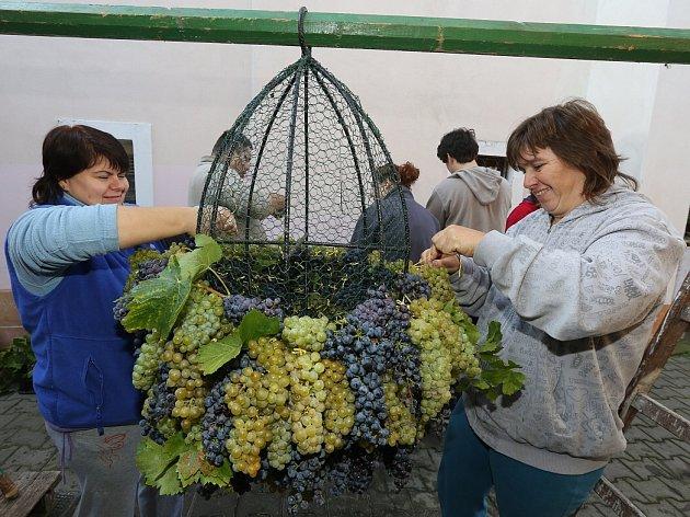 Žernosecké vinobraní bez obřího hroznu, který váží i přes sedmdesát kilogramů, není už myslitelné.