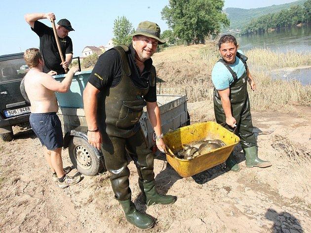 Rybáři z celých Čech se sjeli na Litoměřicko, aby pomohli místním kolegům vylovit ryby uvězněné v povodňových lagunách.