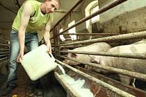 PŘIPOJILI SE K PROTESTU. Zemědělci z Litoměřicka se dnešním dnem připojili k protestu německých sedláků a deset procent denní produkce mléka vylévají do kanálu, nebo nalévají do koryt prasatům jako krmení.