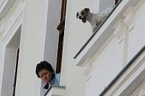 Záchrana psa v Litoměřicích