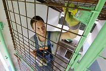 Dobrovolníci z papíren Mondi ve Štětí pomáhají natírat ploty v kotcích pro psy v útulku v Řepnicích