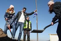 V sobotu u příležitosti 17. listopadu byla vysazena alej 17. listopadu u obce Mnetěš na Roudnicku