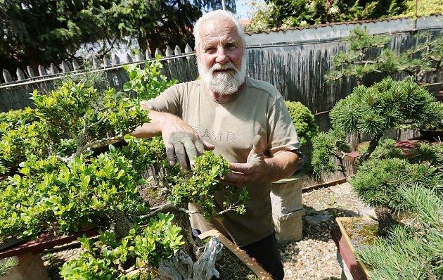 NA SVÉ ZAHRADĚ vPoplzích má Karel Chramosta velkou sbírku bonsají.