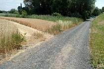 Cesta na poli k nádrži vyjetá v pšenici.