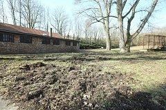 Na pietním místě koncentračního tábora Richard ryjí divoká prasata.