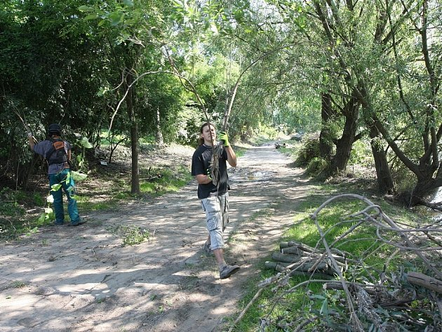 ÚKLID nánosů dřeva a odpadu na cyklostezce u Žalhostic