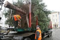 Instalace vánočního stromu v Litoměřicích