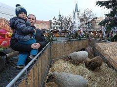 Vánoční trhy v Litoměřicích