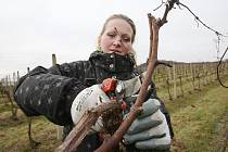 Vinaři vyrazili do vinohradů, věří v dobrý rok.