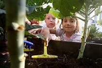 PEČLIVĚ děti v mateřinkách pečují o své záhonky.