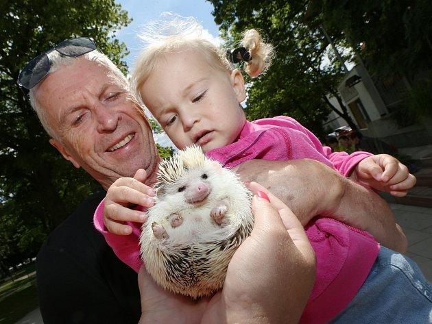 Svaz chovatelů uspořádal pro děti výstavu v Jiráskových sadech.