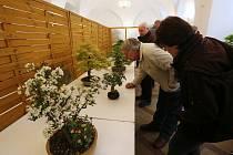 Tradiční jarní výstava bonsají na Libochovickém zámku.
