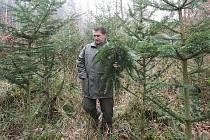 POSTŘIK stromků barevným sprejem má zabránit krádežím. Na snímku jej provádí Aleš Kryšpín.