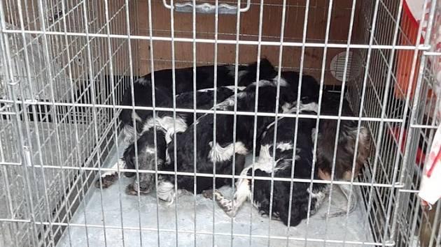 V extrémně nevyhovujících podmínkách žila smečka třinácti psů v jednom z domů ve vesnici Boreč na Lovosicku. Zvířata skončila v řepnickém útulku.