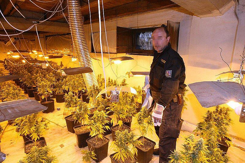 Odhalená pěstírna marihuany v Židovicích.