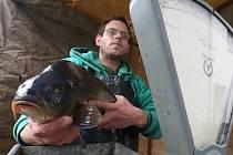 KAPŘÍK. Přestože se na štědrovečerní tabuli stále častěji objevují i jiné ryby, tradiční kapr u Čechů stále kraluje. Prodejci, kteří je nabízejí, se v ulicích měst na Litoměřicku začali objevovat od pátku