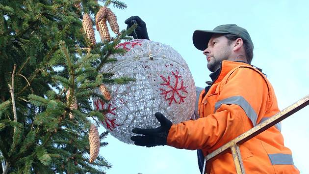 Pracovníci technických služeb začali v úterý 4. prosince zdobit vánoční strom na Mírovém náměstí v Litoměřicích.