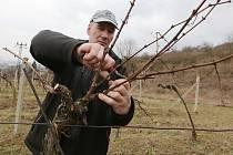 Vinaři se chystají na jaro