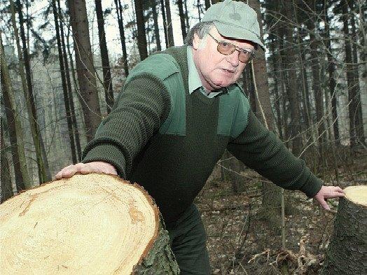 Revírník společnosti Lesy ČR Jiří Fritz ukazuje pařezy, které zbyly v revíru Lipská hora po nelegální těžbě dřeva.