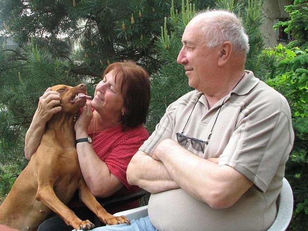 Ve psí smečce manželů Josefa a Růženy Němcových je v největší oblibě Zuzana, sedmiletá fena maďarského hladkosrstého ohaře, která se dokáže na své páníčky pěkně pousmát.