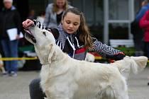 Mezinárodní výstava psů v areálu Zahrady Čech v Litoměřicích