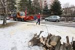 Kácení stromů v Lovosicích