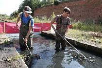 ZOOLOGOVÉ z ústeckého spolku BUFO začali s přemisťováním obojživelníků z kynet ve vodním systému terezínské pevnosti před jejich čištěním a opravou.
