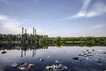 Životní prostředí, ilustrační fotografie