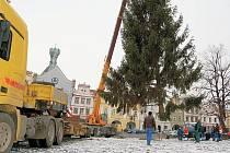 Instalace vánočního stromu na Mírovém náměstí.