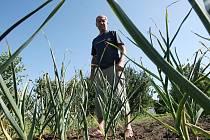 """""""V úterý večer jsem ze své zahrady odjel poté, co jsem všechen česnek zalil. Ve středu ráno jsem se vrátil a čekalo mě velmi nepříjemné překvapení,"""" postěžoval si důchodce Antonín Zeman."""