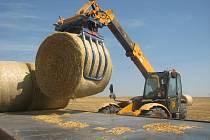 USKLADŇUJÍ. Agro Hoštka slámu potřebuje pro chov zhruba 1 500 kusů dobytka.