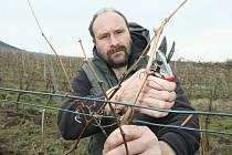 POSLEDNÍ přebytečné loňské letorosty odstraňuje v těchto dnech velkožernosecký vinař Pavel Hrabkovský na zbývajících několika řadách Ryzlinku rýnského ve vinici pod Radobýlem.