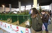 Výstava domácího zvířectva v areálu výstaviště Zahrady Čech.