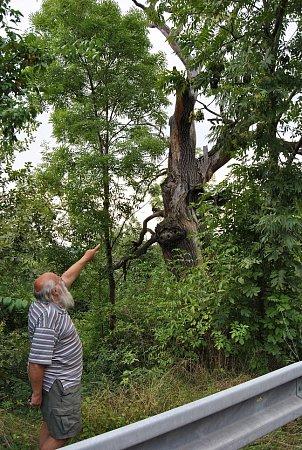 SUCHÝ KMEN UMUČENÉHO DUBU se schoval za náletové dřeviny. Zcesty jej zahlédne jen velmi bystrý pozorovatel. Přesto jsou zde lidé, kterým není osud památného stromu lhostejný. Ojeho okolí se stará kronikář Milan Malík se svým synem.