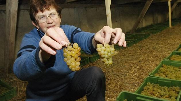 Chystané víno bude vhodné spíše ke slavnostním příležitostem a přípitkům.