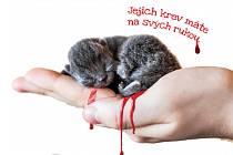 Výřez z plakátu iniciativy Kastruj.cz, která se snaží zabránit usmrcování nechtěných koťat.