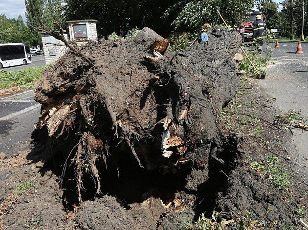 V Terezíně spadl na silnici strom
