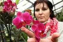 Zaměstnankyně zámku Renata Emingerová ukazuje kvetoucí krásu orchidejí.