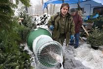 Prodej vánočních stromků v Litoměřicích.