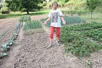 SKLIZENO. Helena Zhánová ukazuje zahradu, kde jí zloději ukradli česnek. Stejně dopadli další dva pěstitelé v okolí. Policisté kvůli zlodějům posilují hlídky v okolí polí a zahrad.